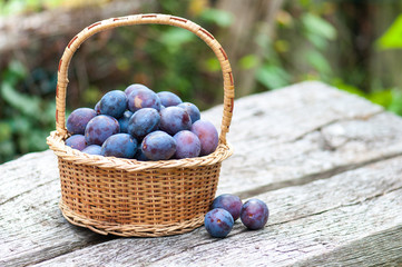 Harvesting of plums