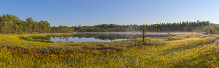 panorama of a forest lake and marsh