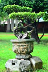jardin chinois