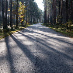 Morning sun beams over autumn road