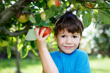 Little boy holding apple