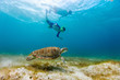 Family snorkeling with sea turtle - 71092605
