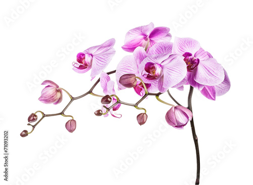 Fotobehang Orchidee Orchid branch
