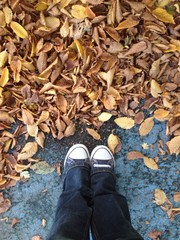 trainers and fall leaves