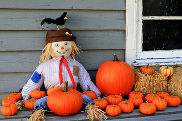 Scarecrow, orange pumpkins, black bird Thanksgiving symbols