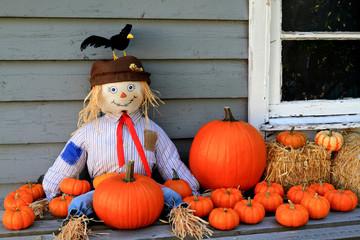 Scarecrow, orange pumpkins, black bird Thanksgiving symbols