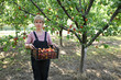 Agriculture, farmer in apricot orchard carry crate with fruit