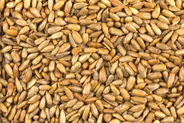 roasted sunflower seeds as background