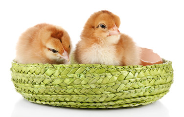 Little cute chickens and egg shell isolated on white
