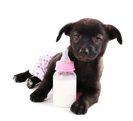 Puppy in panties with bottle of milk isolated on white