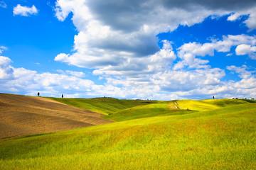 Tuscany, farmland, cypress trees, wheat and green fields. Pienza