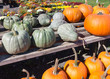 Pumpkins and squash on display