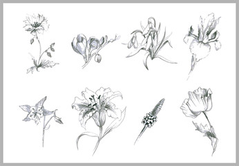 Illustration flowers. Illustration garden and wild flowers.