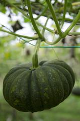 Organic Farm..