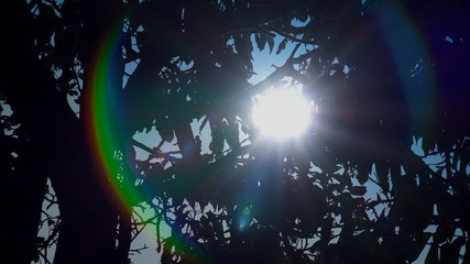 Sunlight through leaves of tree