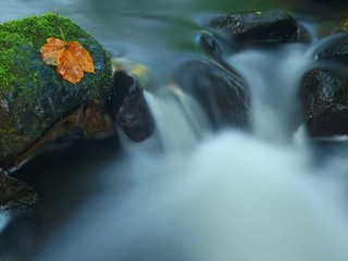 Cascade on small mountain stream, water run over mossy stone