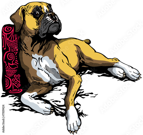 Fototapeta boxer dog