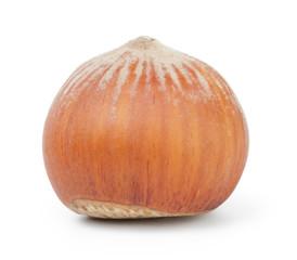 one whole hazelnut