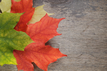autumn maple leaves on wood table