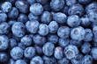 canvas print picture - fresh ripe  blueberries berries