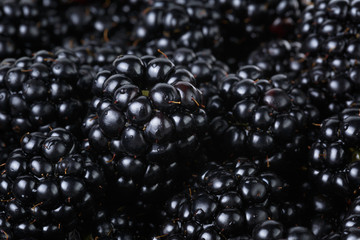 ripe organic blackberries close up