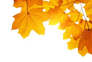 autumn leaves shallow DOF