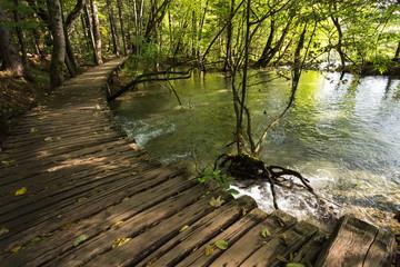 Ponton et rivière en forêt