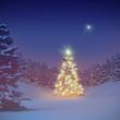 beleuchteter Weihnachtsbaum im Walde