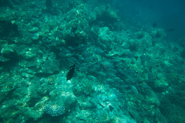 School of fish above coral reef