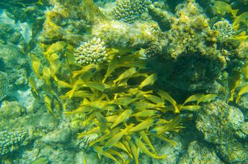 School of fish swimming near coral reef