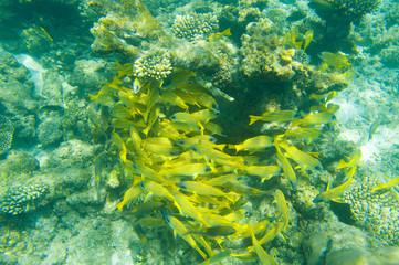 School of fish swimming near coral