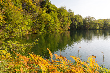 Lacs supérieurs et fougère à Plitvice-Plitvicka