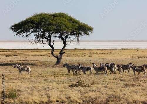 Foto op Plexiglas Zebra Zebras in front of Etosha Pan, Namibia