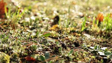 forest litter dolly shot