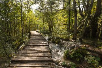 Ponton et eau en forêt