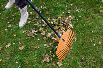 A person raking fallen leaves on the lawn with a fan rake