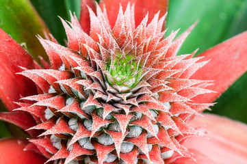 Close up of pineapple crown