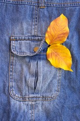 yellow fallen leaves in the pocket of jeans