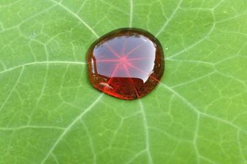 Lotuseffekt hydrophobe Oberfläche