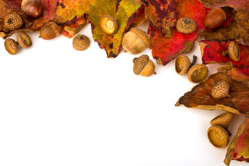 Herbstlaub und Eicheln