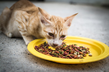 A cat eating food