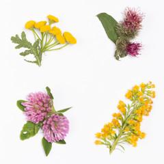 clover, burdock, goldenrod, Chamomile
