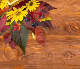 Autumn time: background  with leaves of wild grapes,flowers.