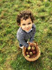 raccolta di mele