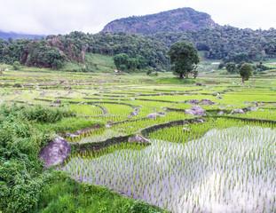 Rice field terraces in doi inthanon, Ban Pha Mon Chiangmai Thail