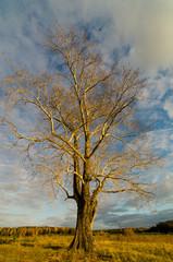 осенний пейзаж с одиноким деревом на закате