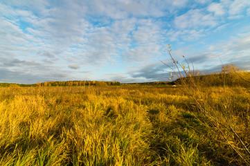 осенний пейзаж с лугом на закате