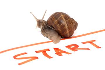 Snail Sportsman
