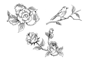 vintage rose and bird drawing