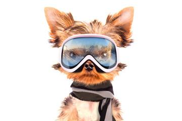 dog  dressed as skier